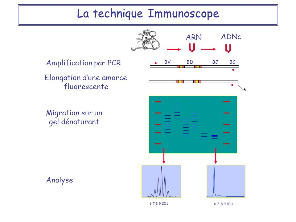 La technique Immunoscope