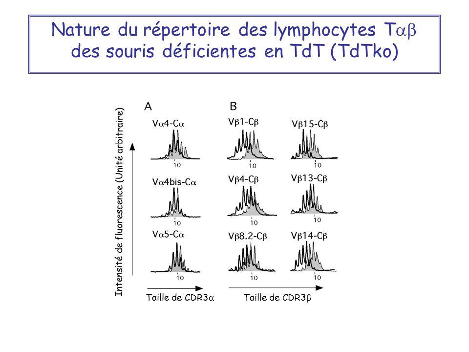 Nature du répertoire des lymphocytes Tab