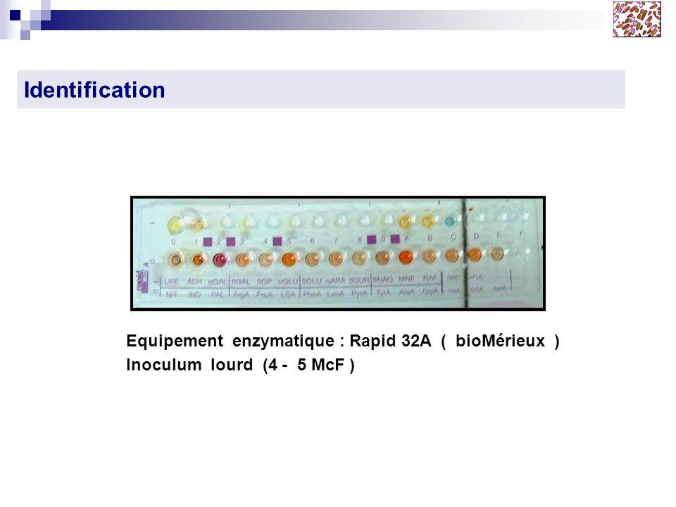 Identification Equipement enzymatique : Rapid 32A ( bioMérieux )