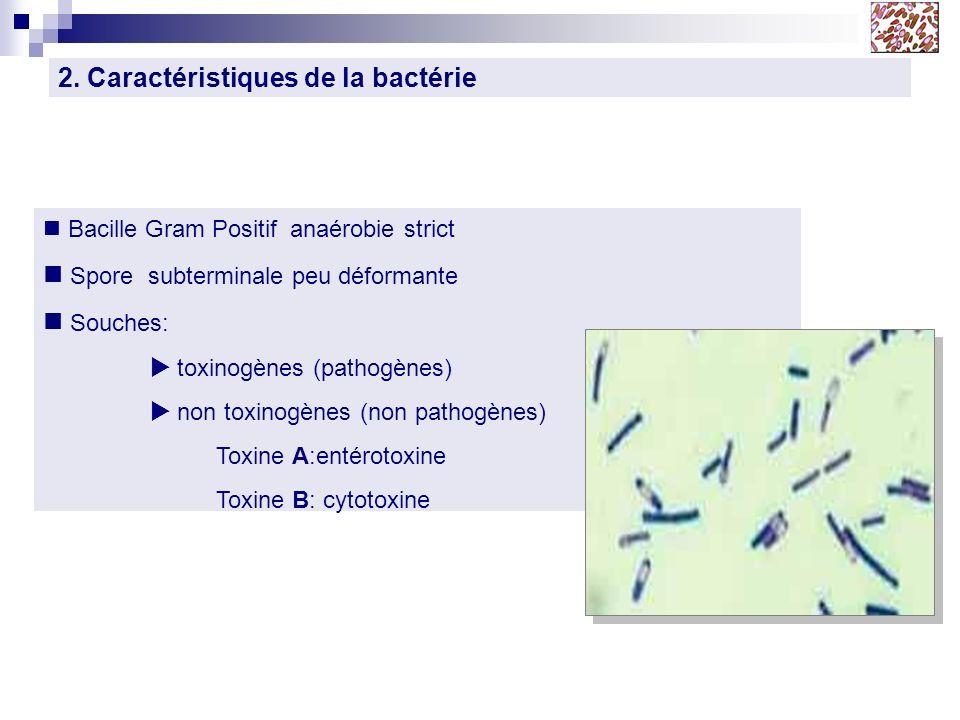 2. Caractéristiques de la bactérie