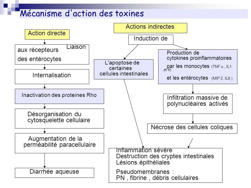 Mécanisme d action des toxines