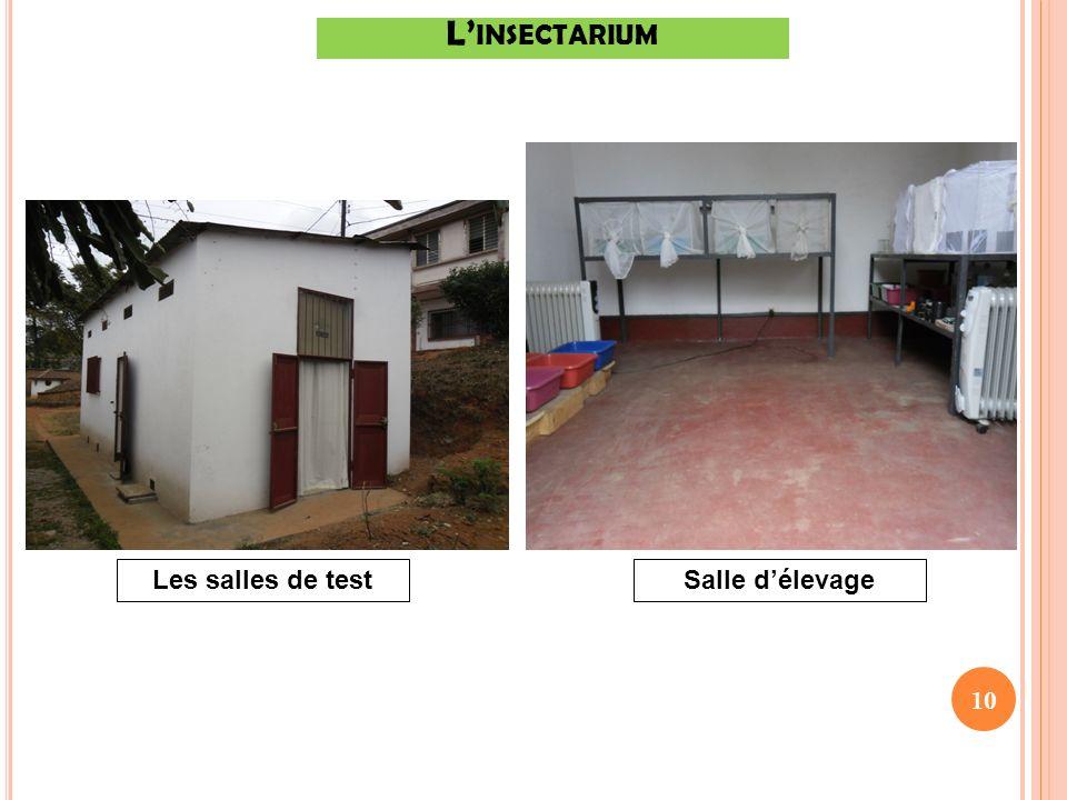 L'insectarium Les salles de test Salle d'élevage