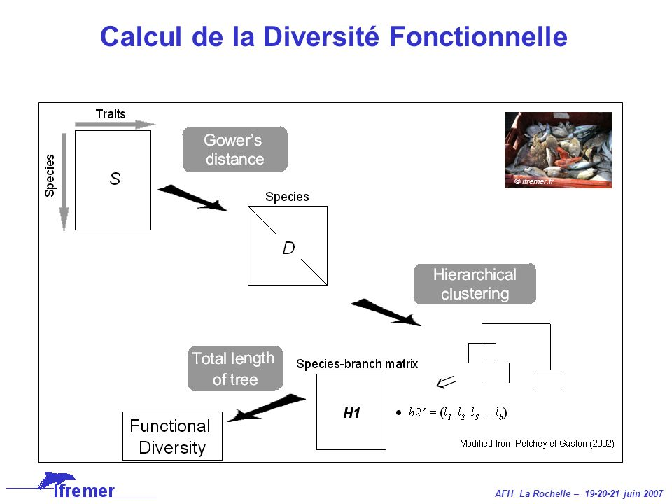 Calcul de la Diversité Fonctionnelle