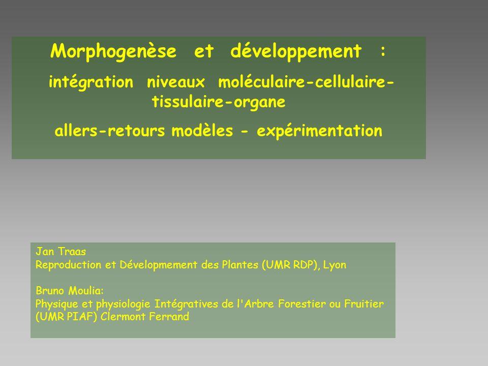 Morphogenèse et développement :