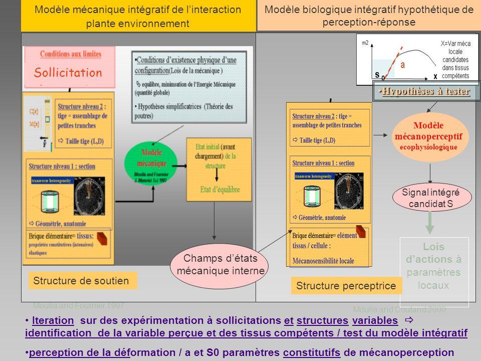 Modèle mécanoperceptif ecophysiologique