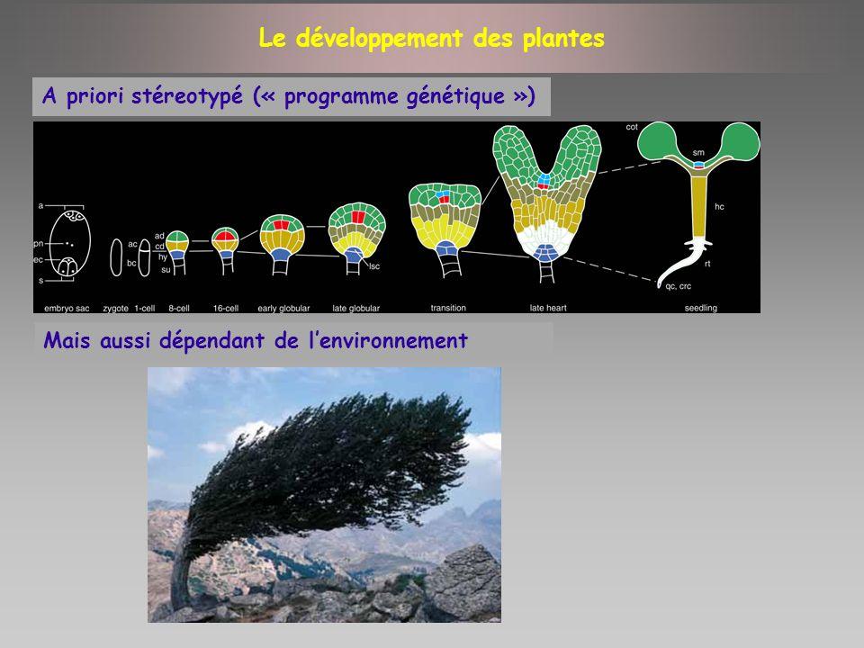 Le développement des plantes