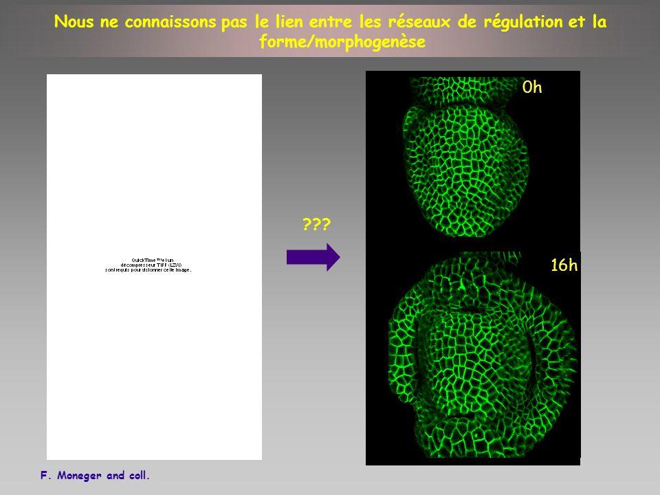 Nous ne connaissons pas le lien entre les réseaux de régulation et la forme/morphogenèse