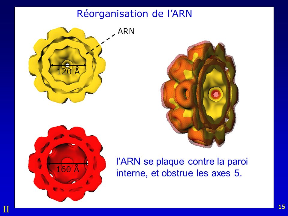 Réorganisation de l'ARN