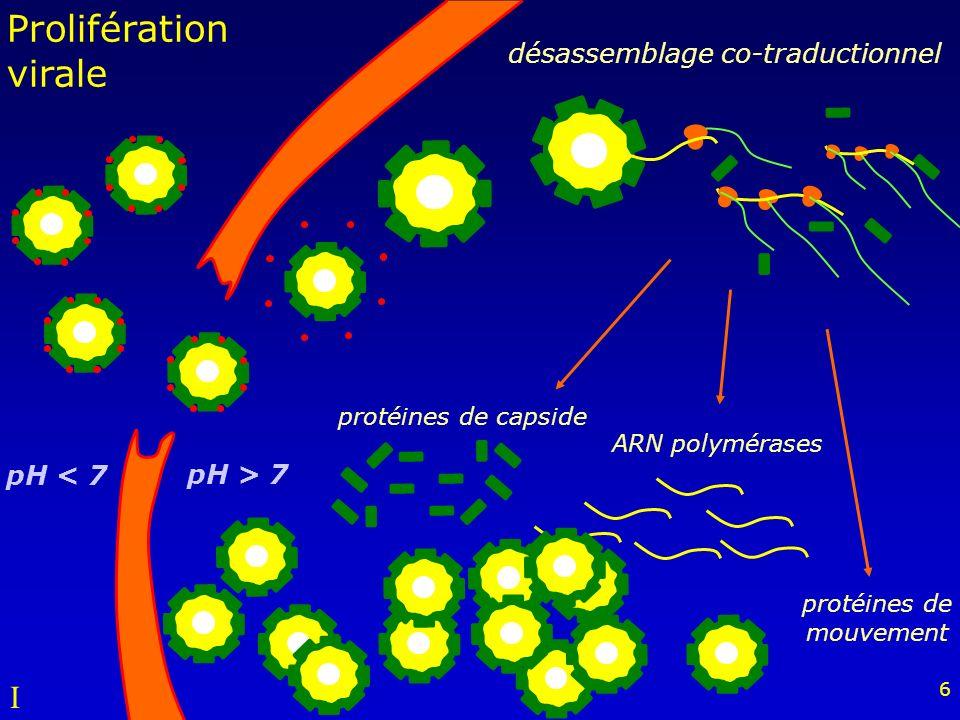 protéines de mouvement