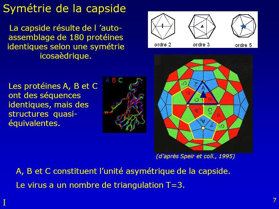 Symétrie de la capside I