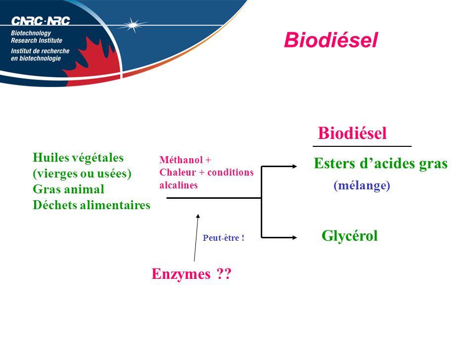 Biodiésel Biodiésel Esters d'acides gras Glycérol Enzymes