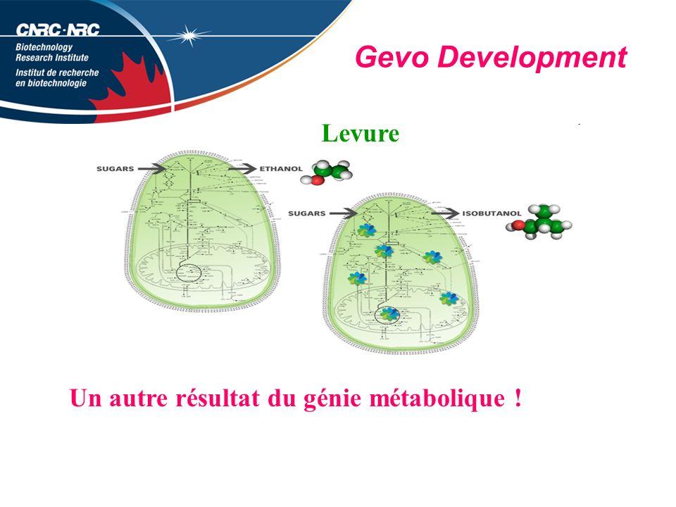 Gevo Development Levure Un autre résultat du génie métabolique !