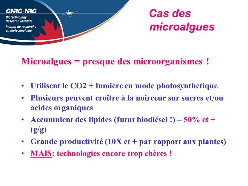 Microalgues = presque des microorganismes !
