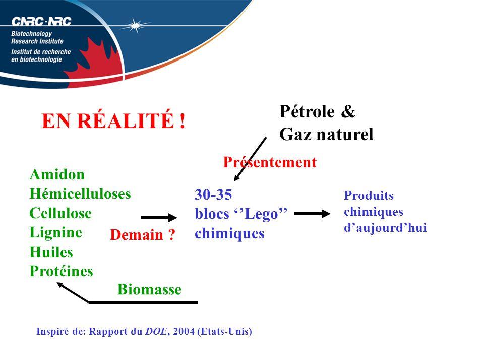 EN RÉALITÉ ! Pétrole & Gaz naturel Présentement Amidon Hémicelluloses
