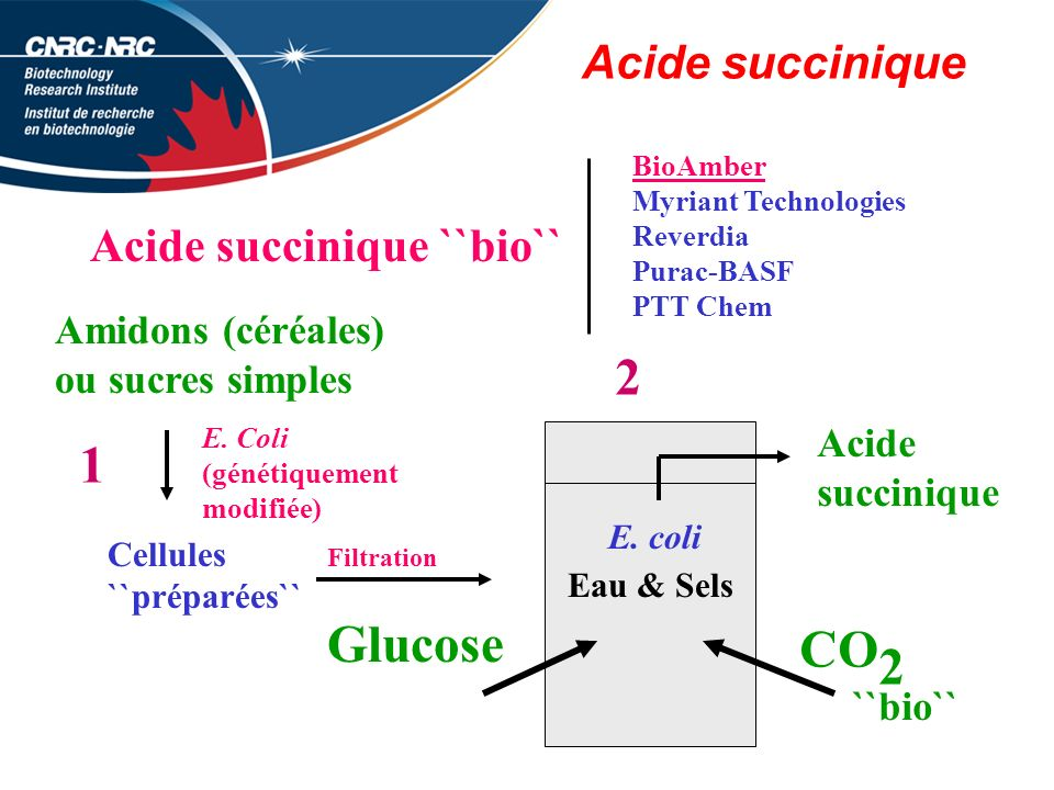 2 1 Glucose CO 2 Acide succinique Acide succinique ``bio``