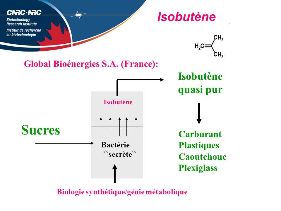 Sucres Isobutène Isobutène quasi pur Global Bioénergies S.A. (France):