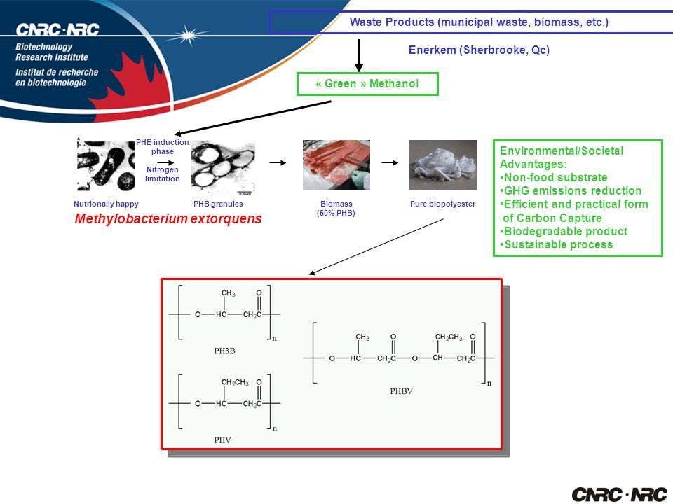 Methylobacterium extorquens