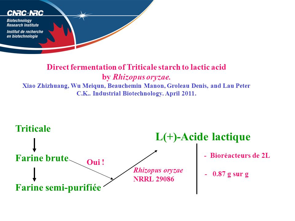 Direct fermentation of Triticale starch to lactic acid
