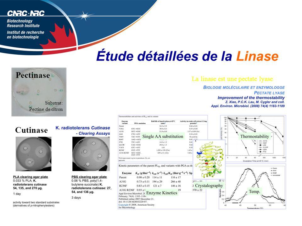 Étude détaillées de la Linase
