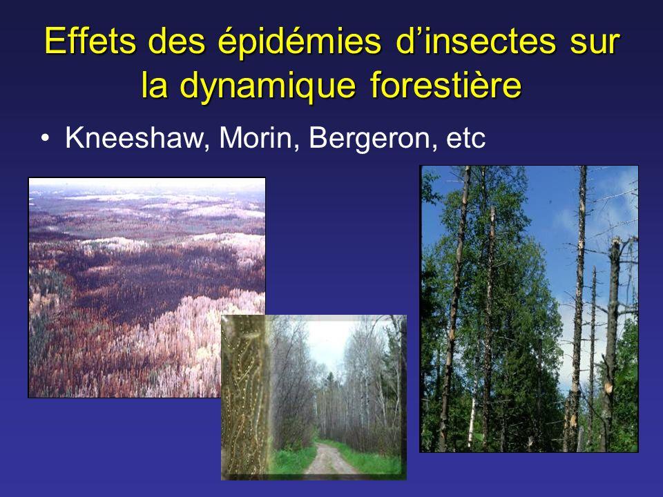 Effets des épidémies d'insectes sur la dynamique forestière