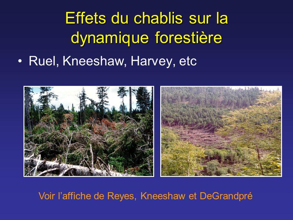 Effets du chablis sur la dynamique forestière