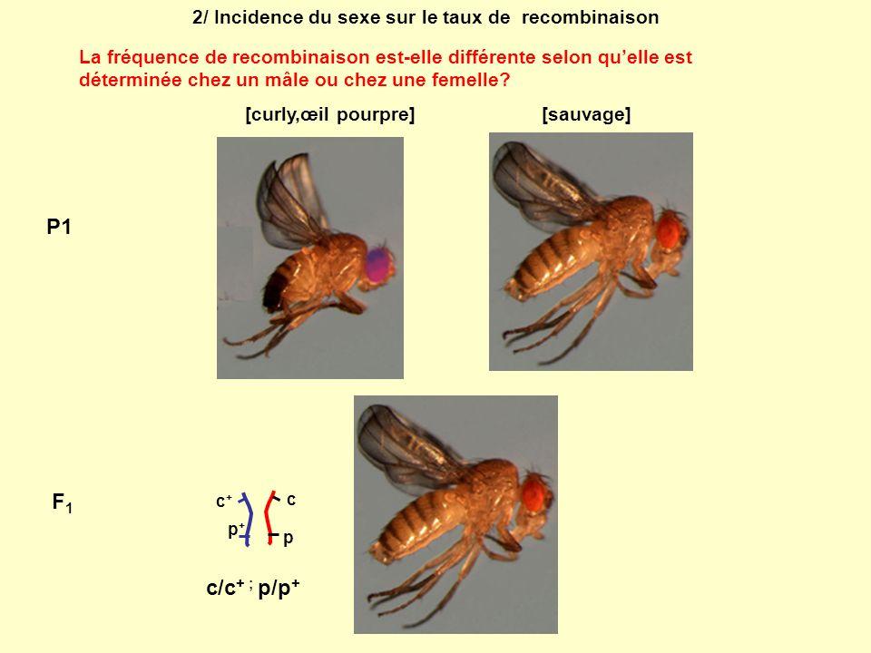 2/ Incidence du sexe sur le taux de recombinaison