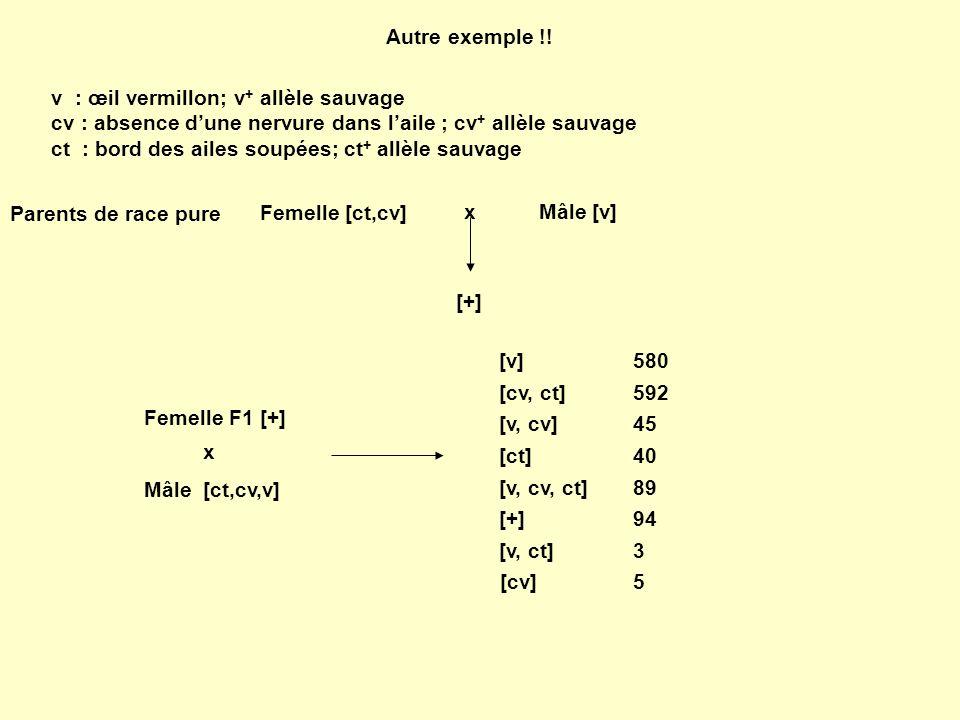 Autre exemple !! v : œil vermillon; v+ allèle sauvage. cv : absence d'une nervure dans l'aile ; cv+ allèle sauvage.