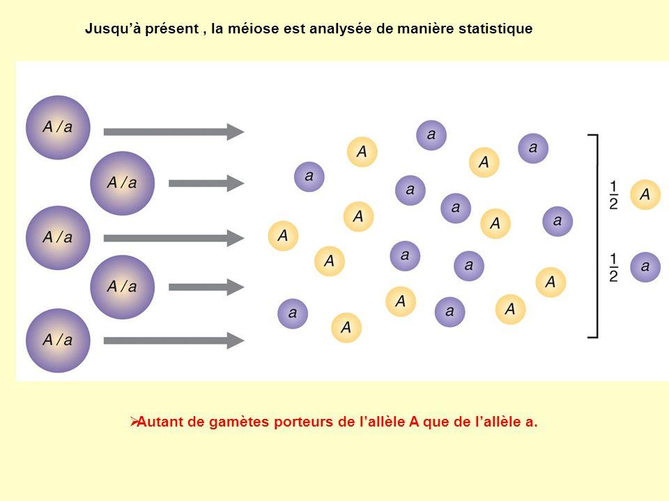 Analyse génétique des asques