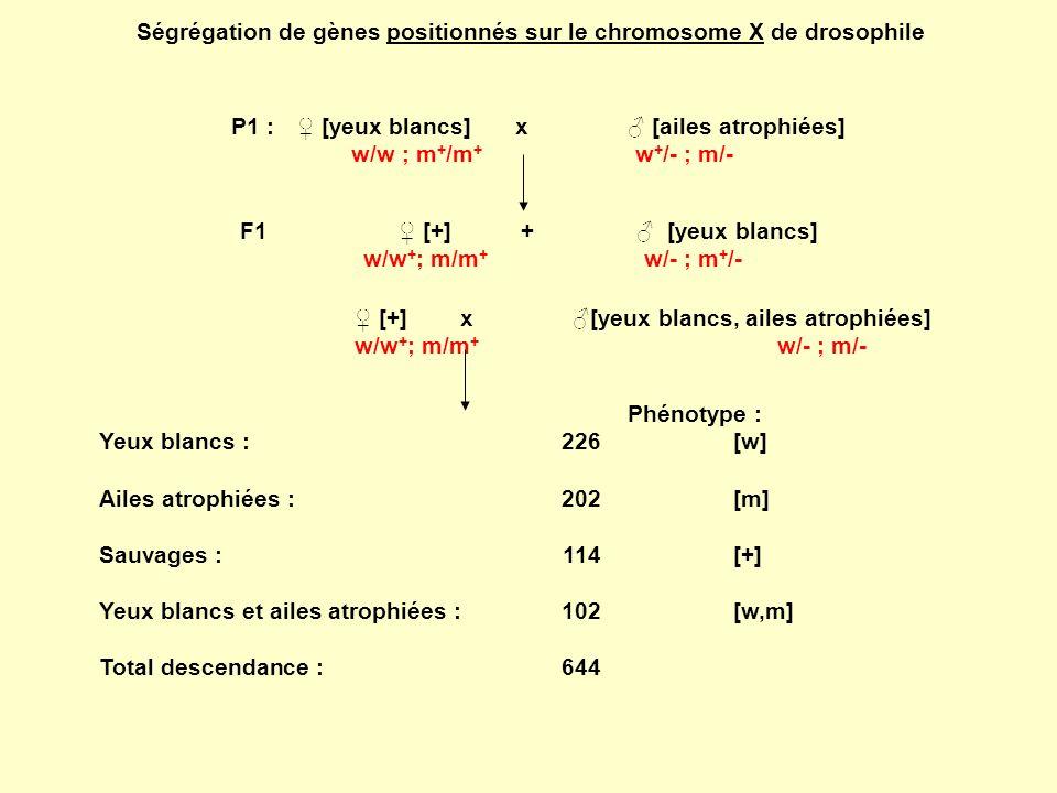 Ségrégation de gènes positionnés sur le chromosome X de drosophile