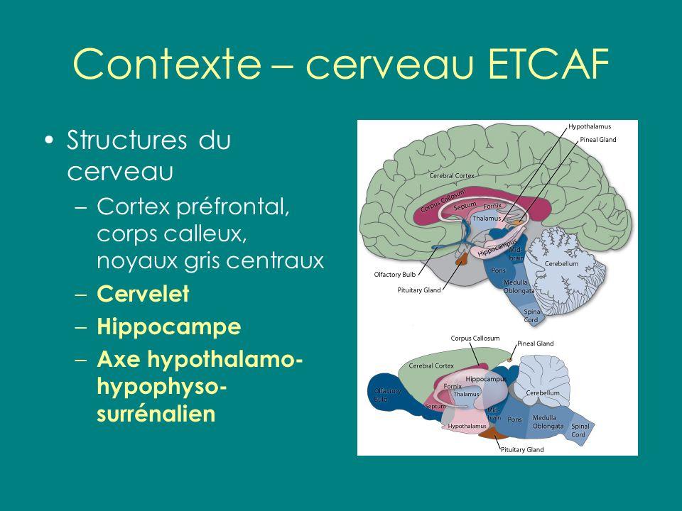 Contexte – cerveau ETCAF
