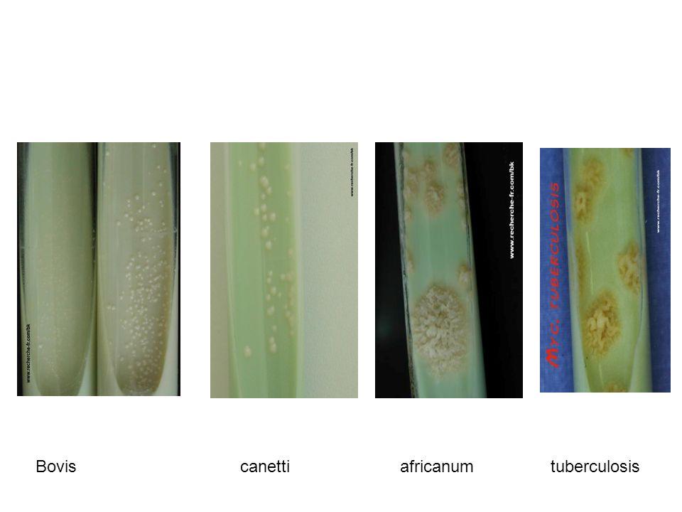Bovis canetti africanum tuberculosis