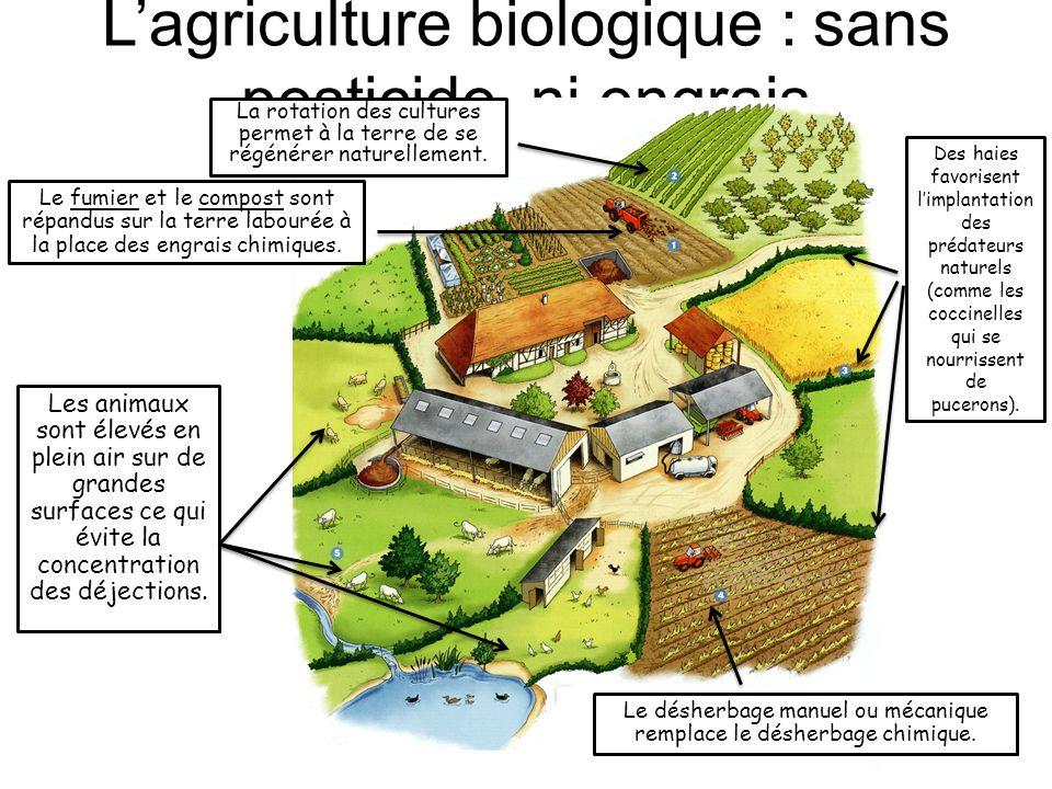 L'agriculture biologique : sans pesticide, ni engrais