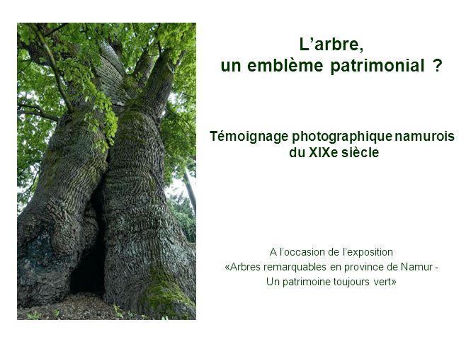 L'arbre, un emblème patrimonial