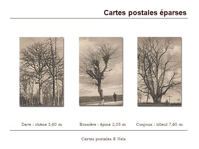 Cartes postales éparses