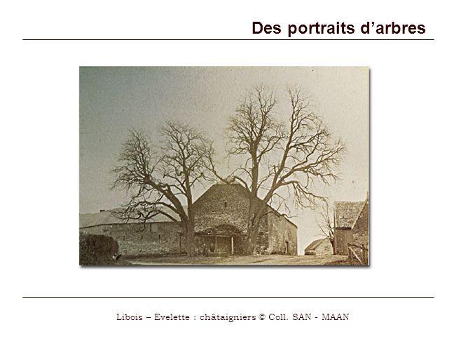 Des portraits d'arbres