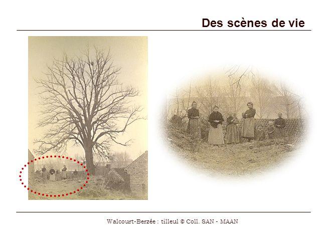 Walcourt-Berzée : tilleul © Coll. SAN - MAAN
