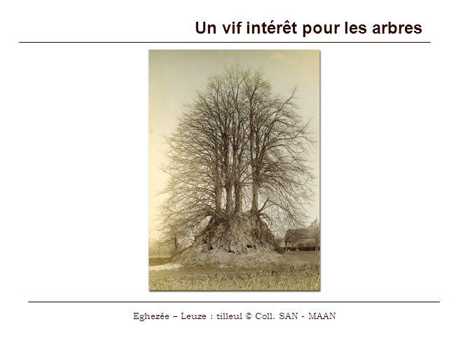 Un vif intérêt pour les arbres