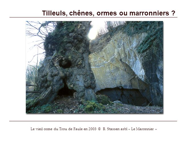 Tilleuls, chênes, ormes ou marronniers