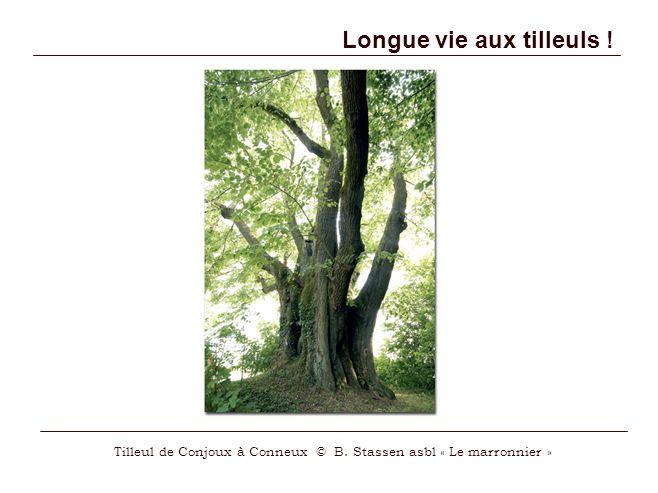Longue vie aux tilleuls !