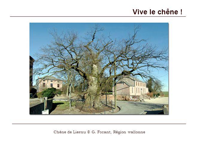 Chêne de Liernu © G. Focant, Région wallonne