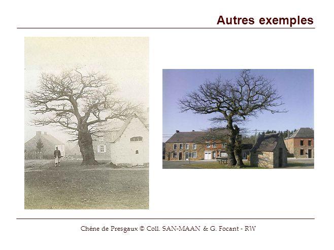 Chêne de Presgaux © Coll. SAN-MAAN & G. Focant - RW