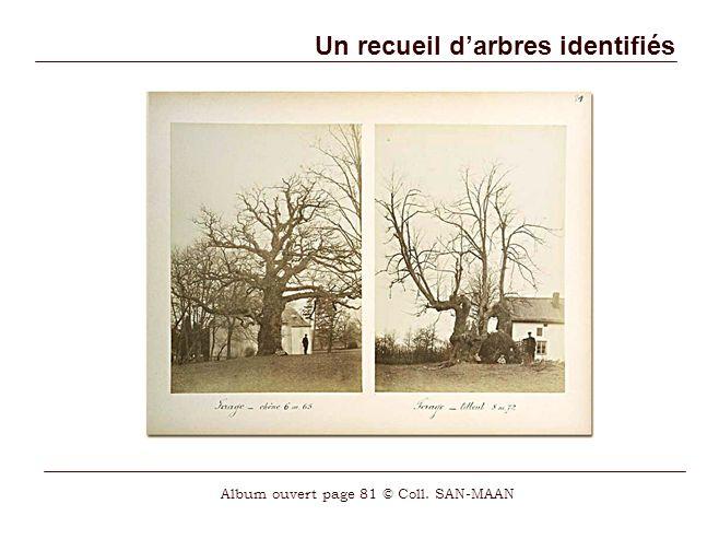Un recueil d'arbres identifiés