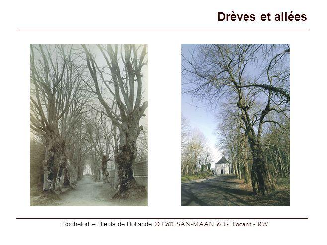Rochefort – tilleuls de Hollande © Coll. SAN-MAAN & G. Focant - RW