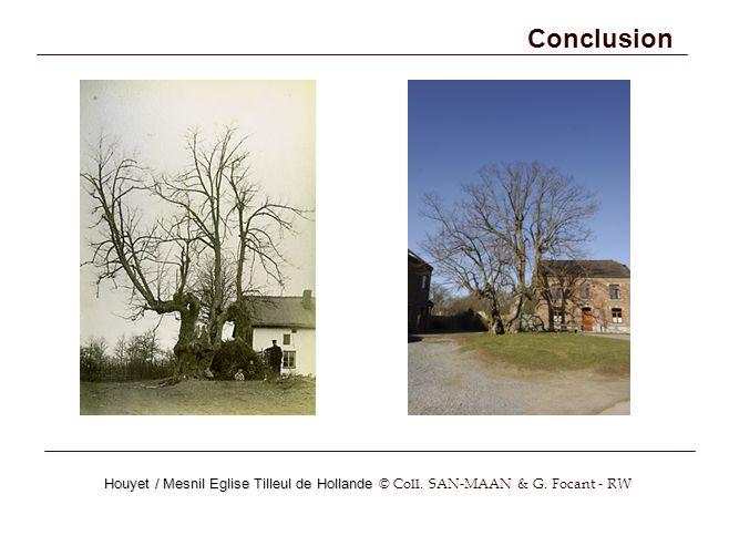 Conclusion Houyet / Mesnil Eglise Tilleul de Hollande © Coll. SAN-MAAN & G. Focant - RW