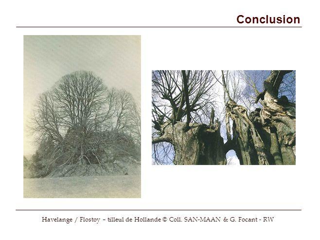 Conclusion Havelange / Flostoy – tilleul de Hollande © Coll. SAN-MAAN & G. Focant - RW