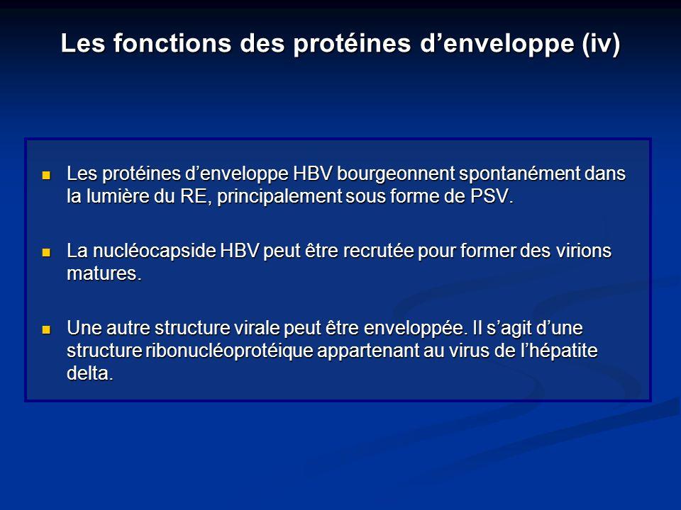 Les fonctions des protéines d'enveloppe (iv)