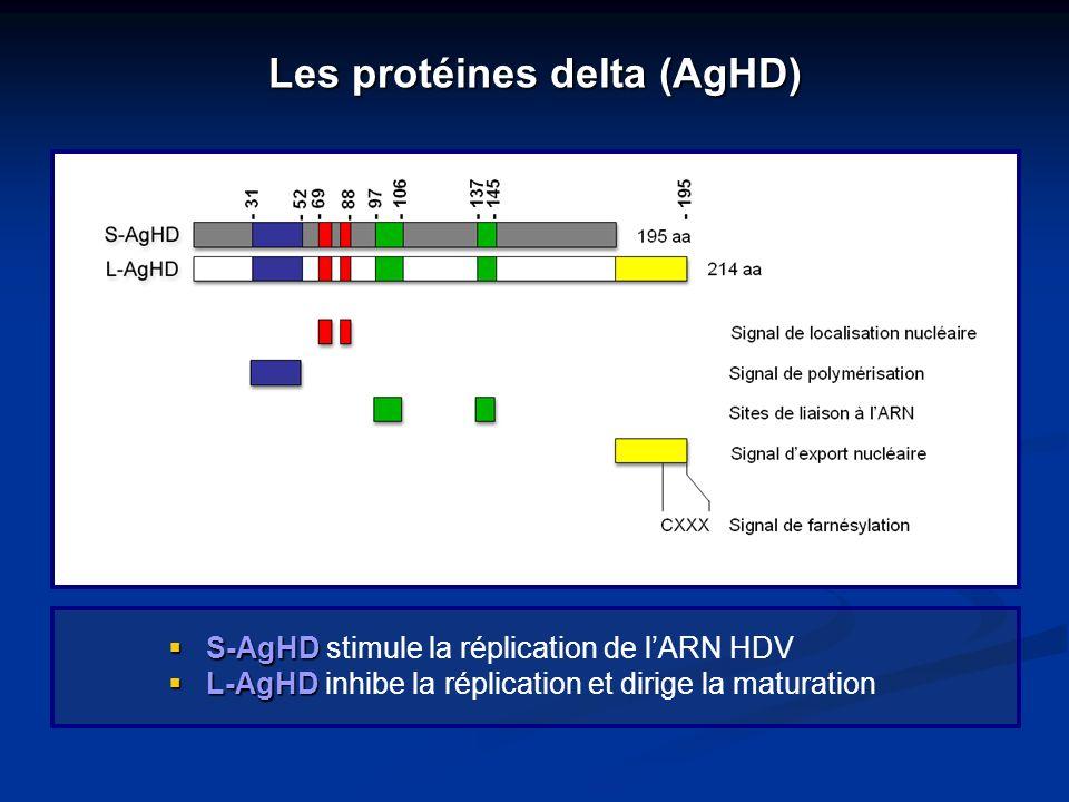 Les protéines delta (AgHD)