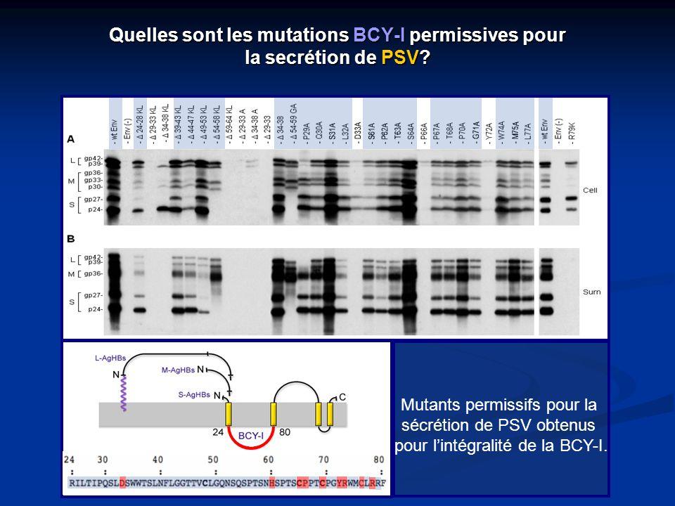 Quelles sont les mutations BCY-I permissives pour la secrétion de PSV