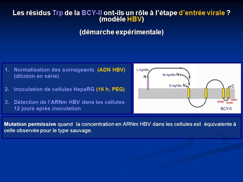 Les résidus Trp de la BCY-II ont-ils un rôle à l'étape d'entrée virale