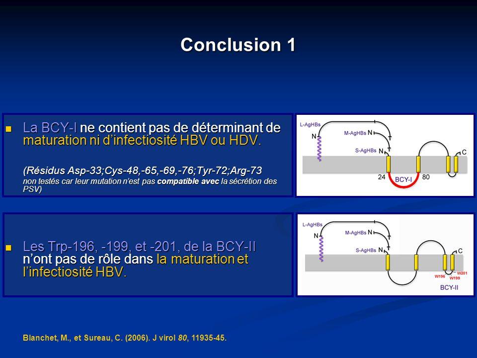 Conclusion 1 La BCY-I ne contient pas de déterminant de maturation ni d'infectiosité HBV ou HDV. (Résidus Asp-33;Cys-48,-65,-69,-76;Tyr-72;Arg-73.